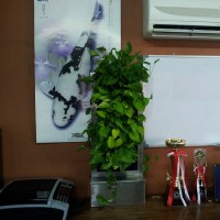 Vertical Garden Aquatic Paradise Office