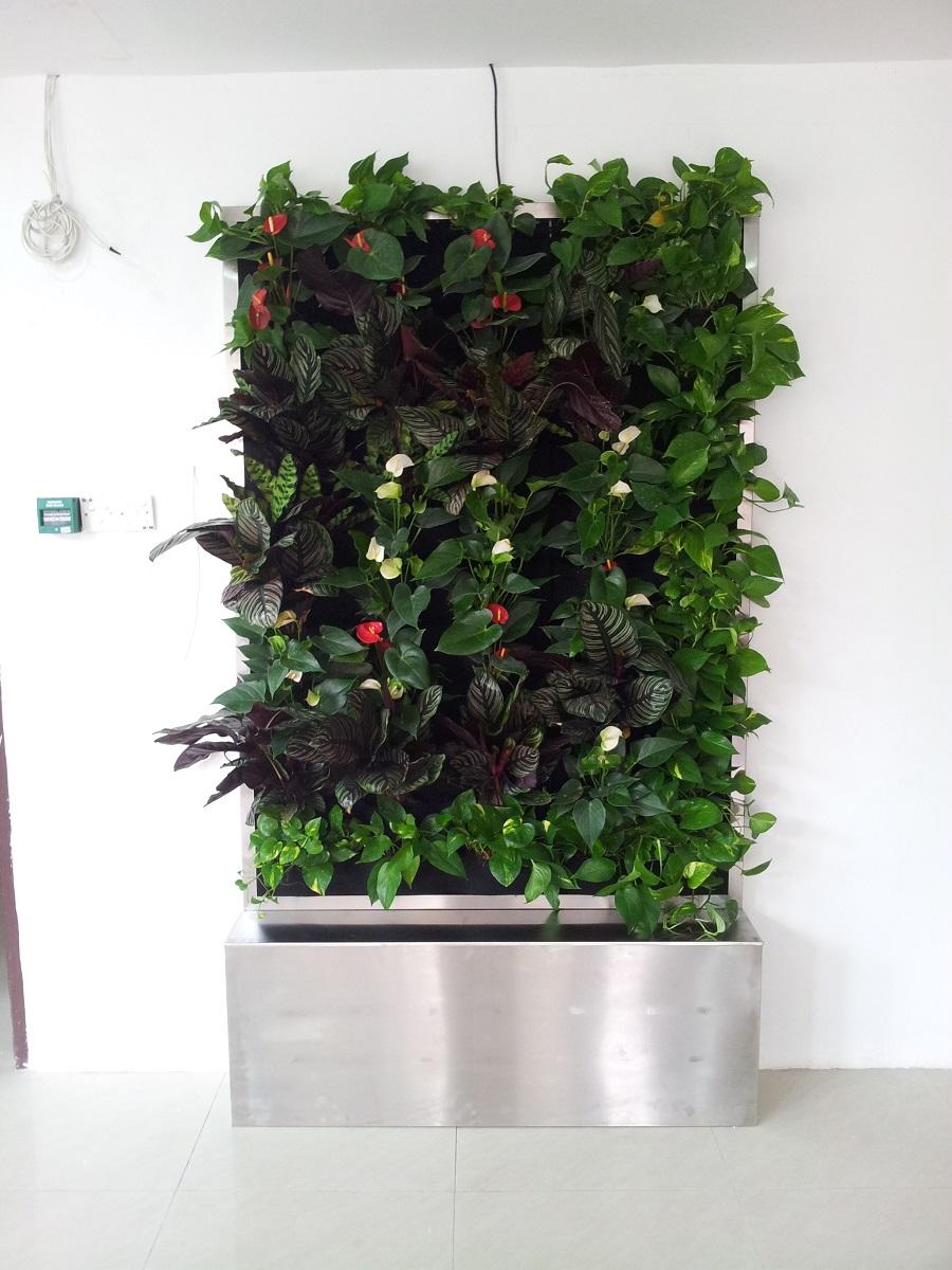Vertical Garden in Point College 3