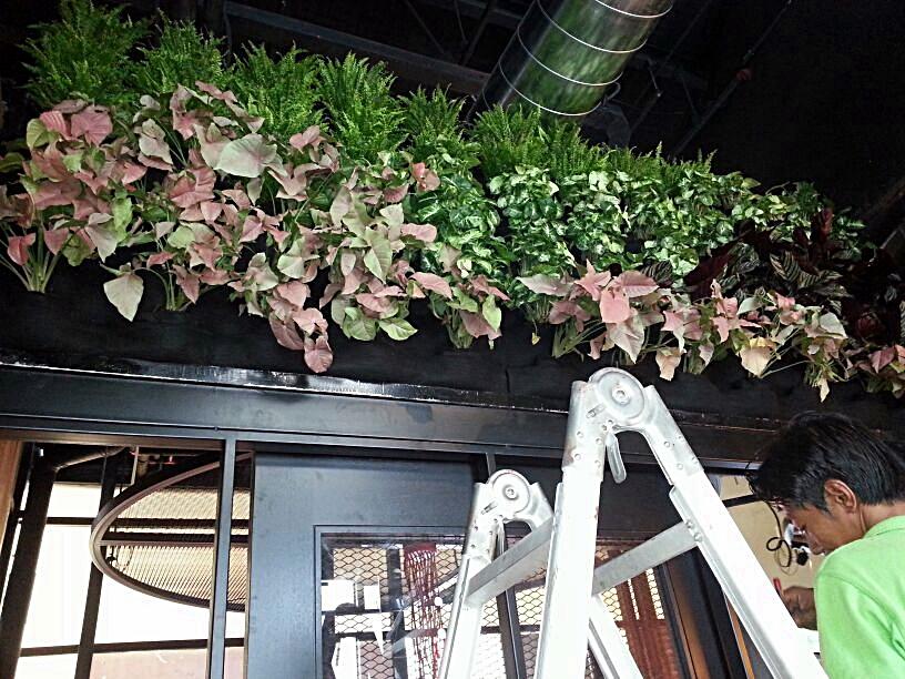 Vertical Garden in Bangsar Thai Restaurant
