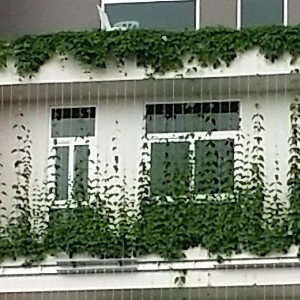 Green Facade Lush Eco