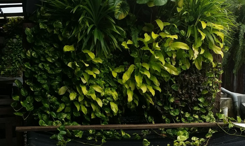 Vertical Garden and Fish Pond