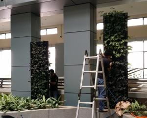 Green Wall TMRD